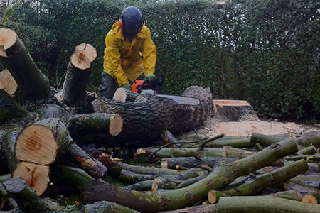 Tree Surgeon Services Cheshire